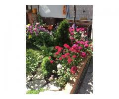 Градина в гр.Елхово