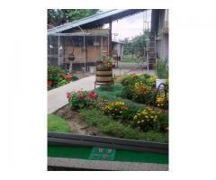 Цветен килим в градината