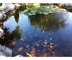 Алпинеум и езерце