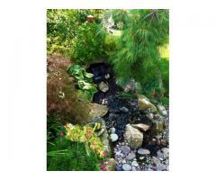 Идеи за езерца и водапади в градината